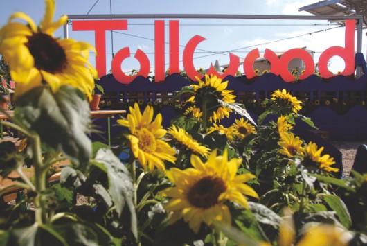 Tollwood Sommerfestival von Markus Dlouhy